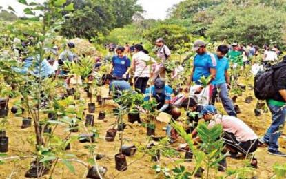 Andhra Pradesh: Plantation unit to increase green cover