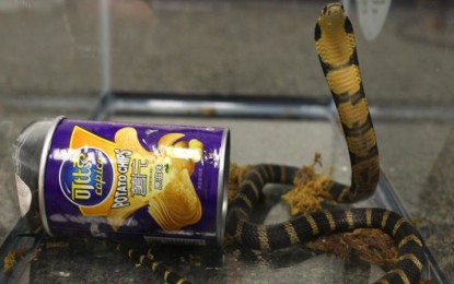 American man trapped trying to smuggle king cobras in cans of french fries