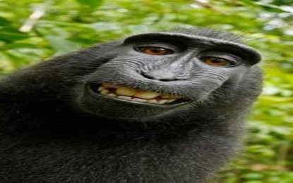 The suit was settled on the rights to the monkey selfie photo