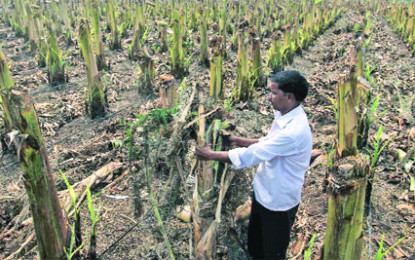 Help to Maharashtra Farmers Who Lost Crops To Hailstorms